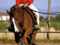Cavalli6